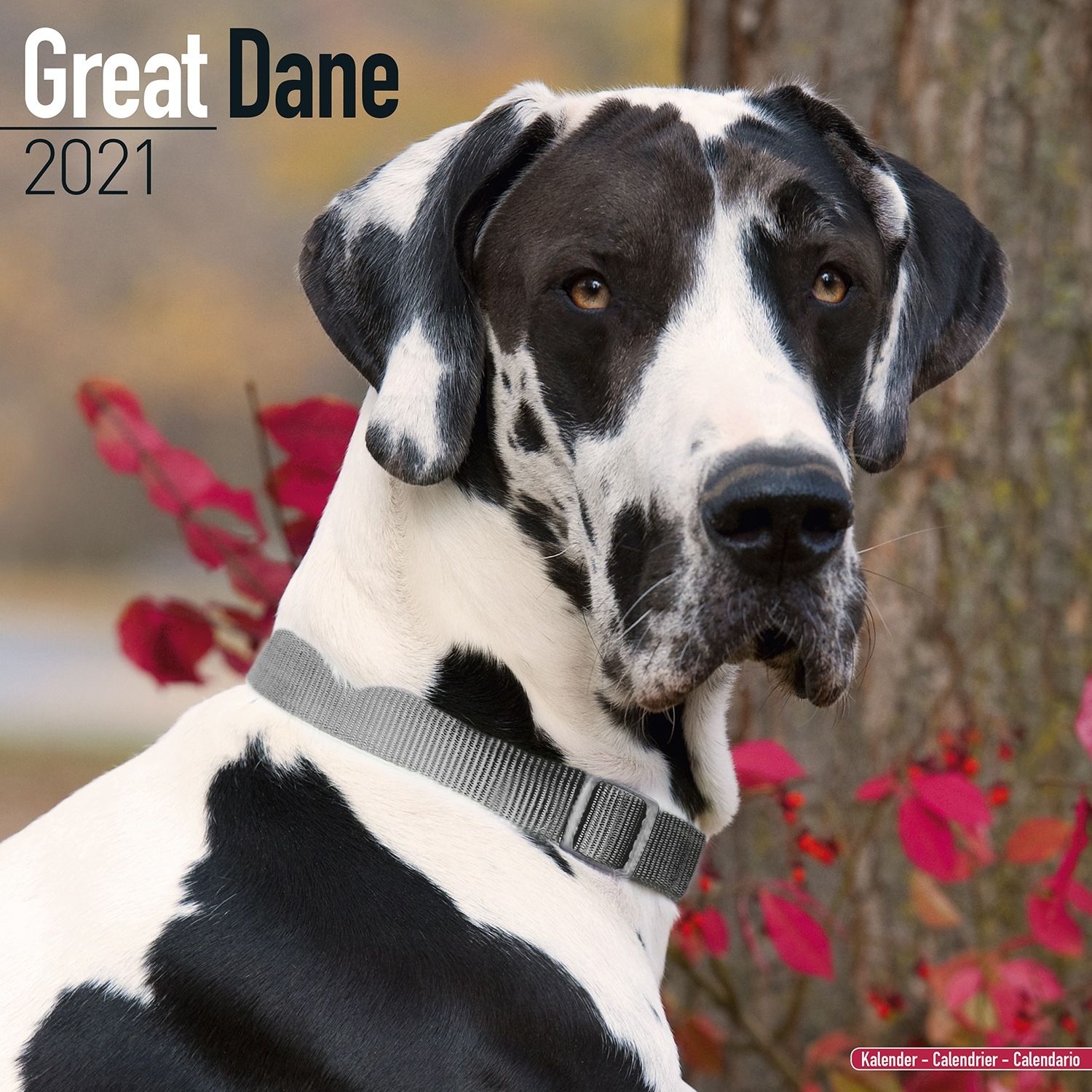 Great Dane (Euro) Calendar 2021   Great Dane Dog Breed Calendar