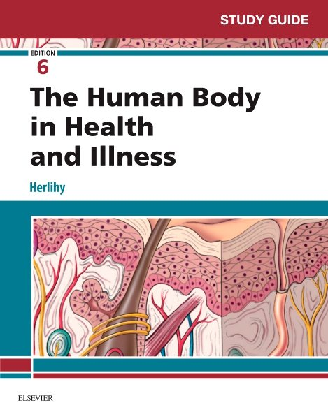 study guide for the human body in health and illness walmart com rh walmart com Anatomy Study Cards Anatomy Study Guides Online