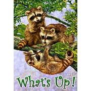 What's Up Raccoon Garden Flag