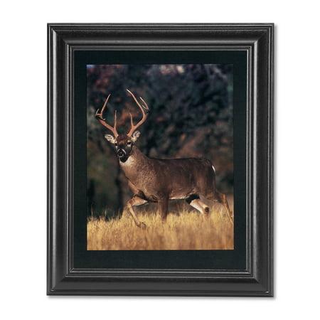 Large Whitetail Buck Deer Big Antler Rack Photo Wall Picture Black Framed