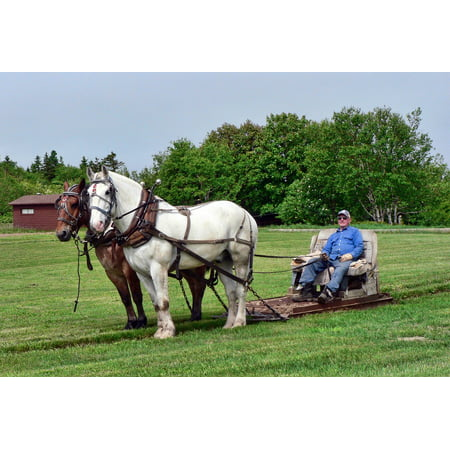 Canvas Print Driving Fun Drawn Transportation Pull Horses Stretched Canvas 10 x 14