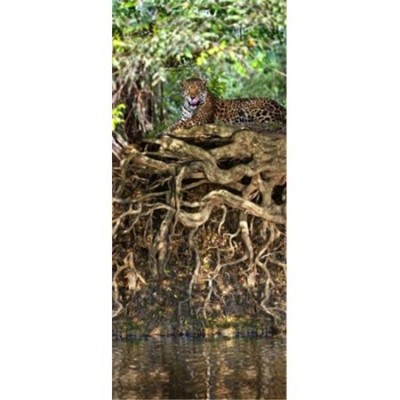 Jaguar resting at the riverside  Three Brothers River  Meeting of the Waters State Park  Pantanal Wetlands  Brazil Poster Print by  - 12 x (Riverside Park Chicago)