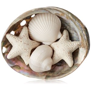 Gianna Rose Seashell Soaps in a Pearlized Shell Dish, 2.9 Oz.