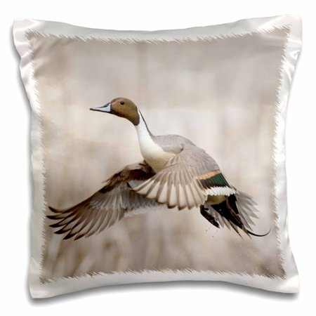 3dRose Pintail Duck in Flight - Pillow Case, 16 by