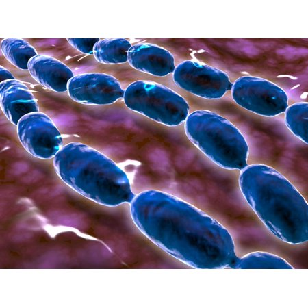 Microscopic View Of Bacterial Pneumonia Canvas Art   Stocktrek Images  33 X 25