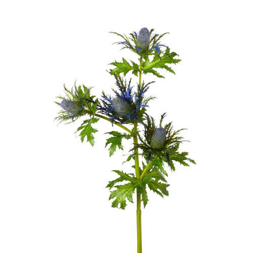 """Floral Thistle Say 22"""""""