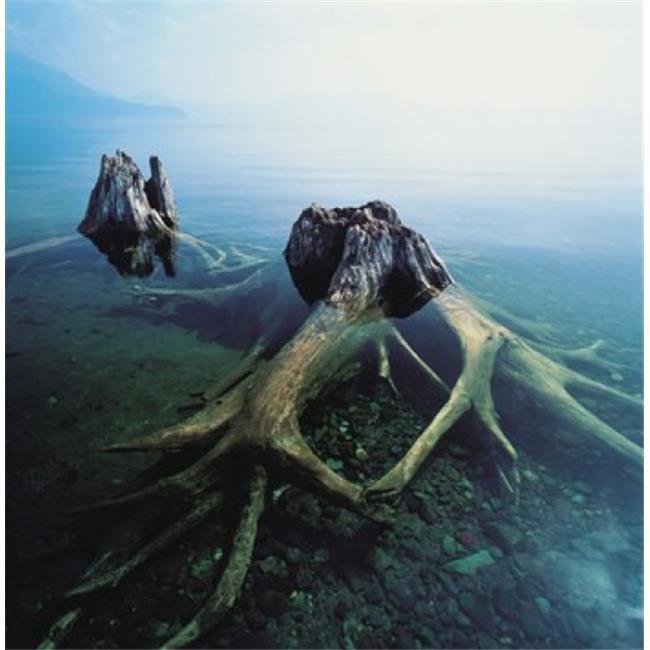 Images panoramiques PPI126928 vieux troncs d'arbres sous-marine copie d'affiche par images panoramiques - 36 x 36 - image 1 de 1