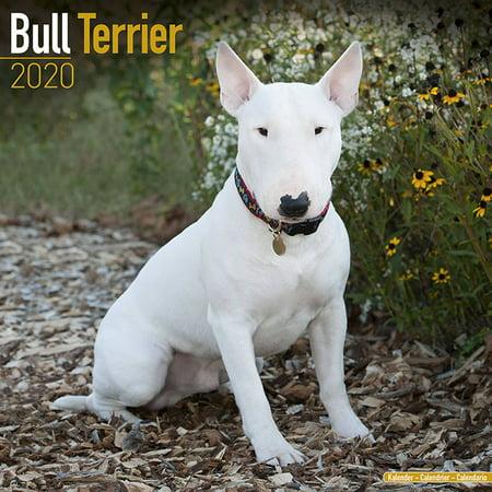 Bull Terrier Calendar 2019 - Bull Terrier Dog Breed Calendar - Bull Terriers Premium Wall Calendar 2018-2019