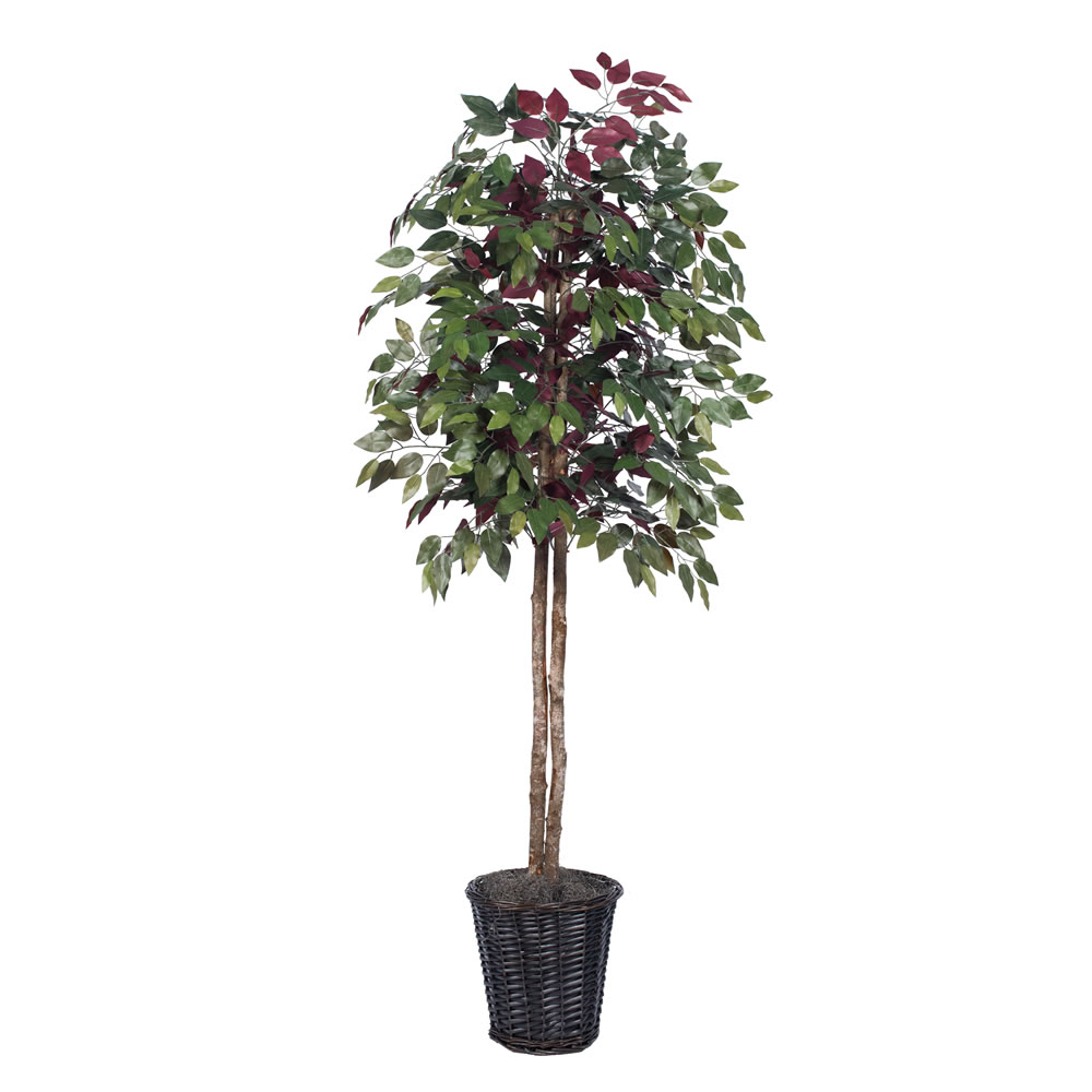 Vickerman 6' Artificial Capensia Tree in Rattan Basket