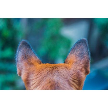 LAMINATED POSTER Dog Puppy Animal Pet Cute Paw Dog Paw Canine Poster Print 24 x 36 - Puppy Paw Print