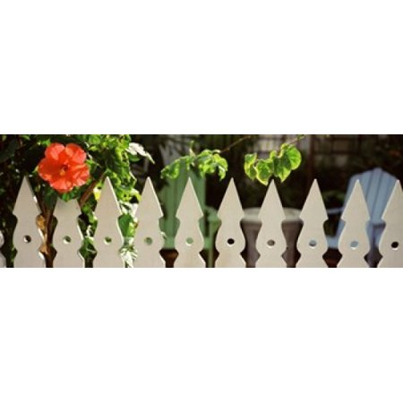 White Picket Fence - White picket fence and red hibiscus flower along Whitehead Street Key West Monroe County Florida USA Canvas Art - Panoramic Images (36 x 13)