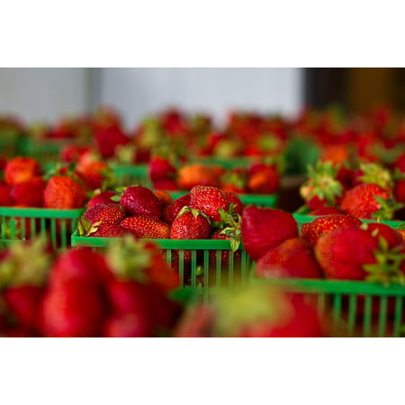 Peel-n-Stick Poster of Fresh Healthy Strawberries Red Fruit Food Baskets Poster 24x16 Adhesive Sticker Poster - Strawberry Baskets