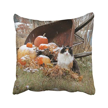 WinHome Decorative Pillowcases Calico Cat Wheelbarrow Of Pumpkins Throw Pillow Covers Cases Cushion Cover Case Sofa 20x20 Inches Two Side - Decorative Wheelbarrow