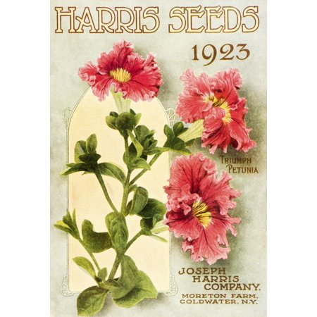 Flower Catalog - Historic Harris Seeds catalog with illustration of Triumph Petunia flower from 20th century Stretched Canvas - Remsberg Inc  Design Pics (12 x 18)