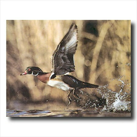 Wood Duck Flying Lake Cabin Wall Picture Art - Wood Duck Pictures