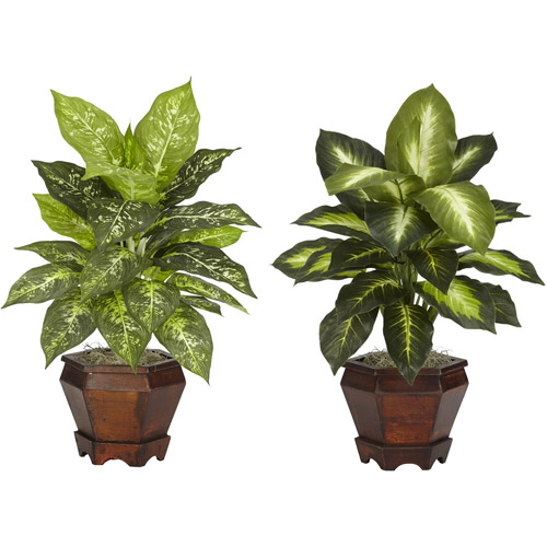 Dieffenbachia Silk Plant with Wood Vase, Assorted, 2pc