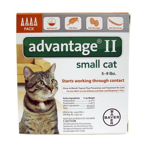 Advantage II Orange Cat, 4 Months