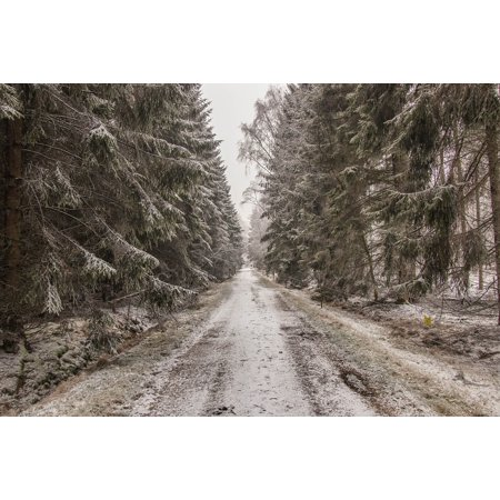 Laminated Poster Snow White Winter Nature Tree Landscape Forest Poster Print 11 x 17 ()