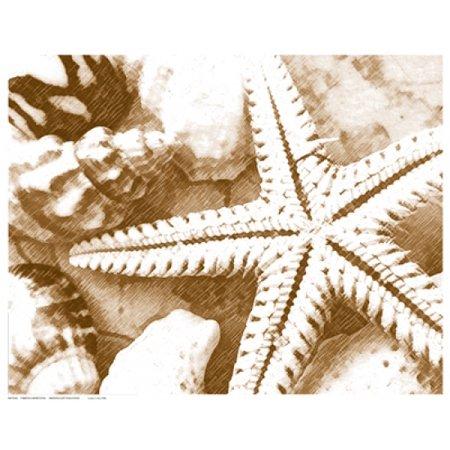 15 Poster Print - Starfish Impression Poster Print (15 x 12)