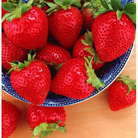 Tristar Everbearing Strawberry 25 Bare Root Plants - Sweetest & Most