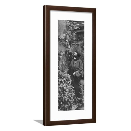 - 'Amelita Galli-Curci - The great diva gathering roses, her favourite flowers', c1925 Framed Print Wall Art