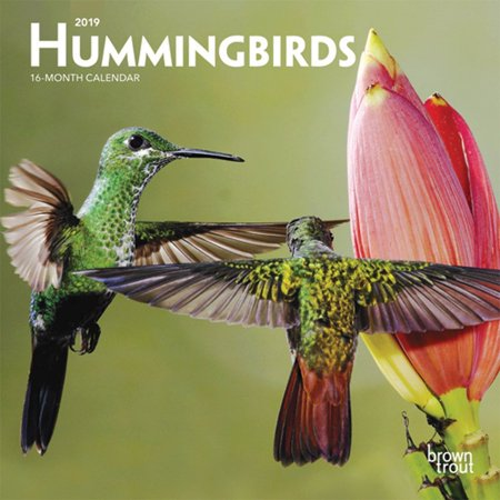 Birds 2008 Calendar (2019 Hummingbirds Mini Wall Calendar, by BrownTrout)