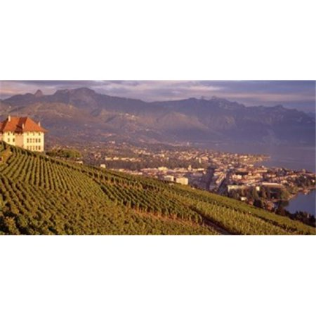 Panoramic Images PPI33160L Vineyard at a hillside  Lake Geneva  Vevey  Vaud  Switzerland Poster Print by Panoramic Images - 36 x 12 - image 1 of 1
