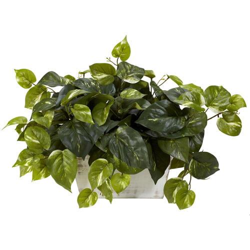 Pothos with White Wash Planter Silk Plant