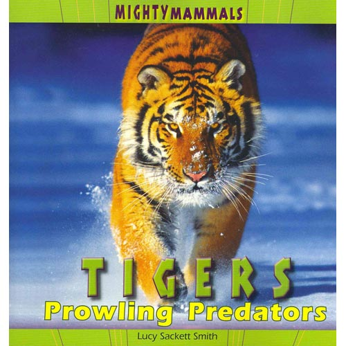 Tigers : Prowling Predators