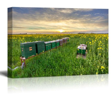 Beautiful Scenery Landscape of Rows of Beehives in a Rapeseed Field at Sunset - Canvas Art Wall Decor - 12