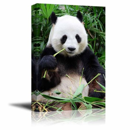 Giant Football Art - Canvas Prints Wall Art - Giant Panda Eating Bamboo | Modern Wall Decor/Home Decoration Stretched Gallery Canvas Wrap Giclee Print & Ready to Hang - 24