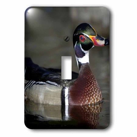 3dRose Wood Duck male portrait - US24 BFR0122 - Bernard Friel, 2 Plug Outlet Cover
