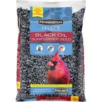 Pennington Select Black Oil Sunflower Seed Wild Bird Feed, 10 lb. Bag