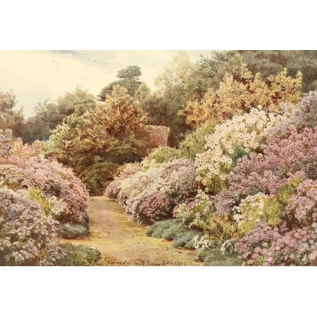 Gs Daisy - Posterazzi Some English Gardens 1904 Munstead Wood Daisies Canvas Art - GS Elgood (24 x 36)