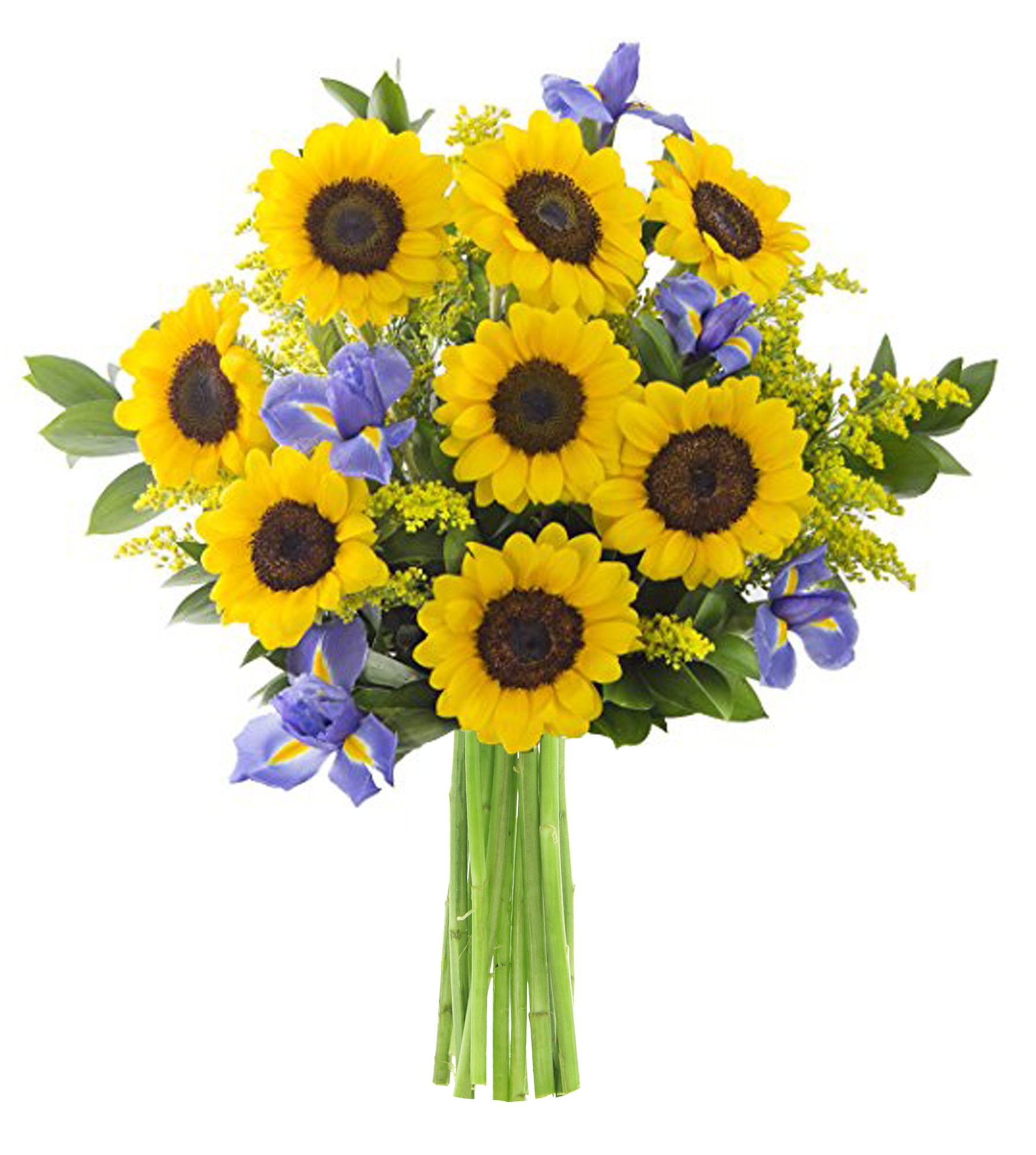 KaBloom: Bouquet of 8 Yellow Sunflowers, 5 Blue Irises, 5 Yellow Solidago Asters, 7 Israeli Ruscus Greens - Fresh Flowers for Delivery