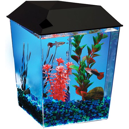 aqua culture 1 gallon starter corner aquarium kit with