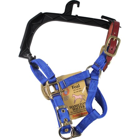 Arabian Horse Halter (Hamilton Halter Company-Adjustable Horse Halter With Leather Headpole- Blue Foal )