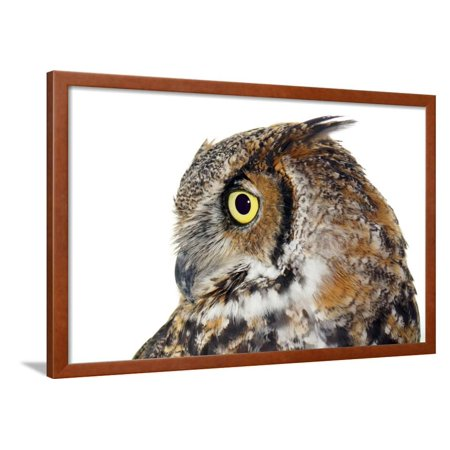 Profile of A Great Horned Owl on White Framed Print Wall Art By Mirage3