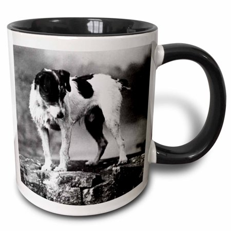 3dRose Jack Russell Terrier (Black and White) - Two Tone Black Mug, (Terrier Black And White)