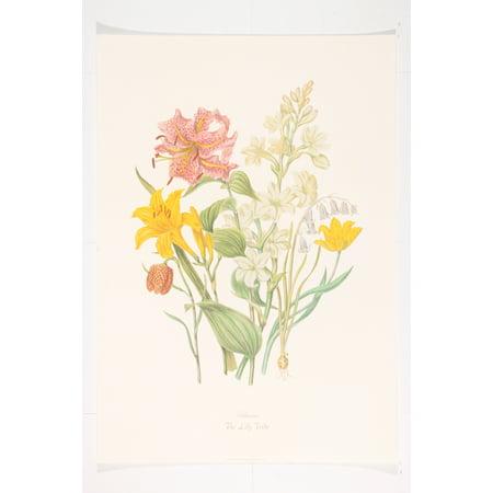 Elizabeth Fine Art (The Lily Tribe - Fine Art Print by Elizabeth Twining (20 x 14 in) )