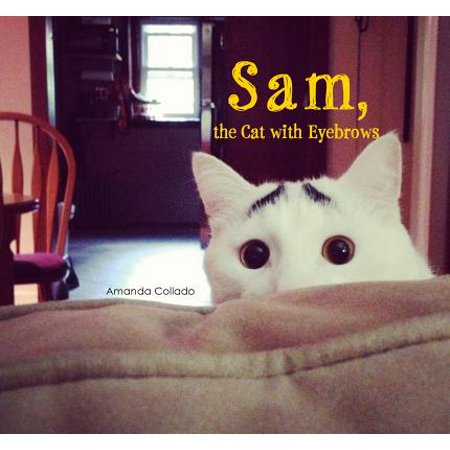 Sam, the Cat with Eyebrows - Sam And Cat Happy Halloween
