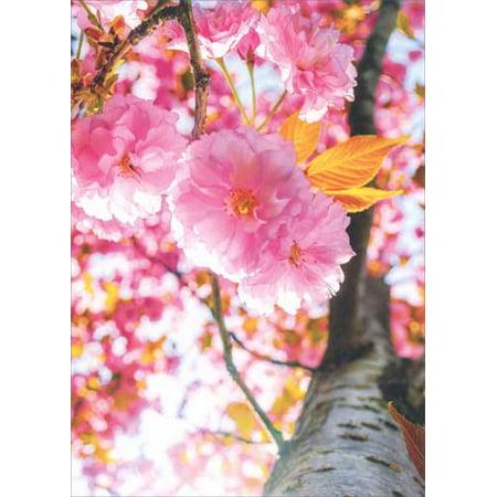 Avanti Press Cherry Blossom Tree Deluxe Matte Blank Note Card (Deluxe Cherry)