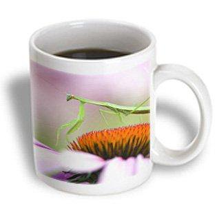3dRose Praying Mantis insect, Pennsylvania - US39 RKL0008 - Raymond Klass, Ceramic Mug, 11-ounce