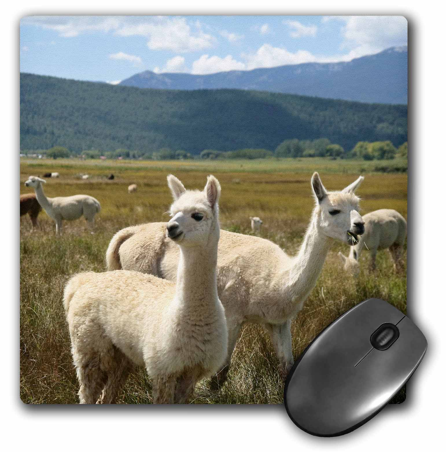 3dRose Victory Ranch Alpaca farm, Mora, New Mexico - US32 JMR0361 - Julien McRoberts, Mouse Pad, 8 by 8 inches