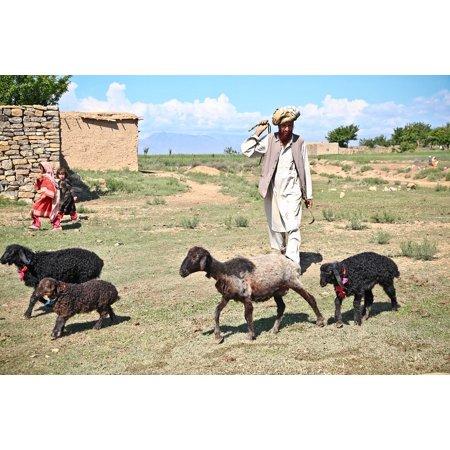 Canvas Print Farm Sheep Man Shepherd Children Afghanistan Stretched Canvas  10 x 14