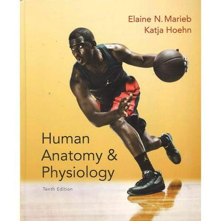 Human Anatomy Physiology Practice Anatomy Lab 30 A Brief