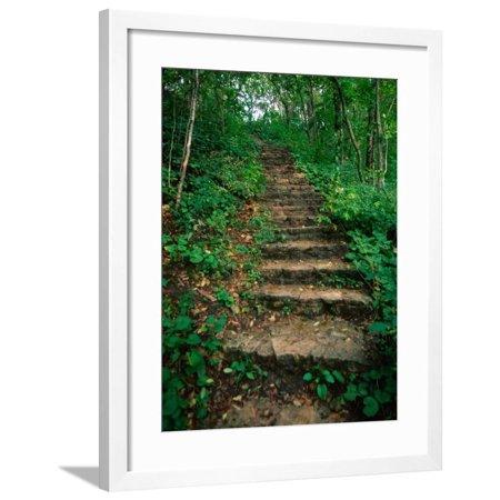 Hiking Trail Through Whitewater State Park,Whitewater State Park,  Minnesota, USA Framed Print Wall Art By John Elk III