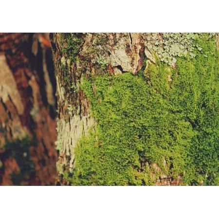 LAMINATED POSTER Velvet Moss Bark Tree Natural Texture Soft Poster Print 24 x 36 Soft Textured Natural