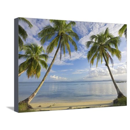 Panama, Bocas Del Toro Province, Carenero Island, Palm Trees and Beach Stretched Canvas Print Wall Art By Jane