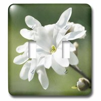 3dRose White magnolia flower, green background, stylized photo - Double Toggle Switch (lsp_270422_2)